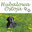 """Domowe, przyjazne miejsce - Hotel dla Psów """"Hubalowa Ostoja"""" Biała i okolice"""